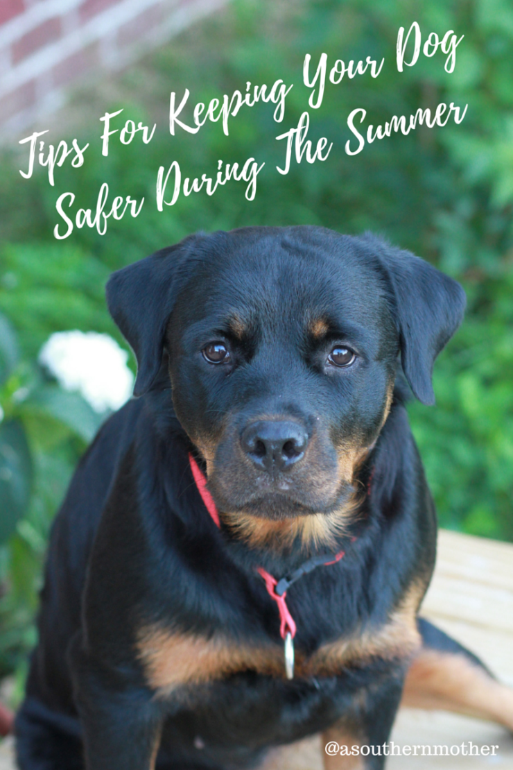 tips for keeping your dog safr during the summer