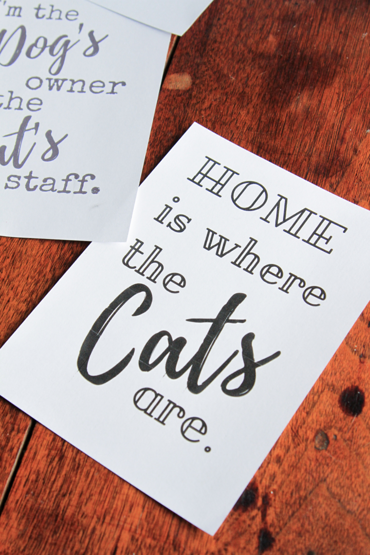 home is where the cats are