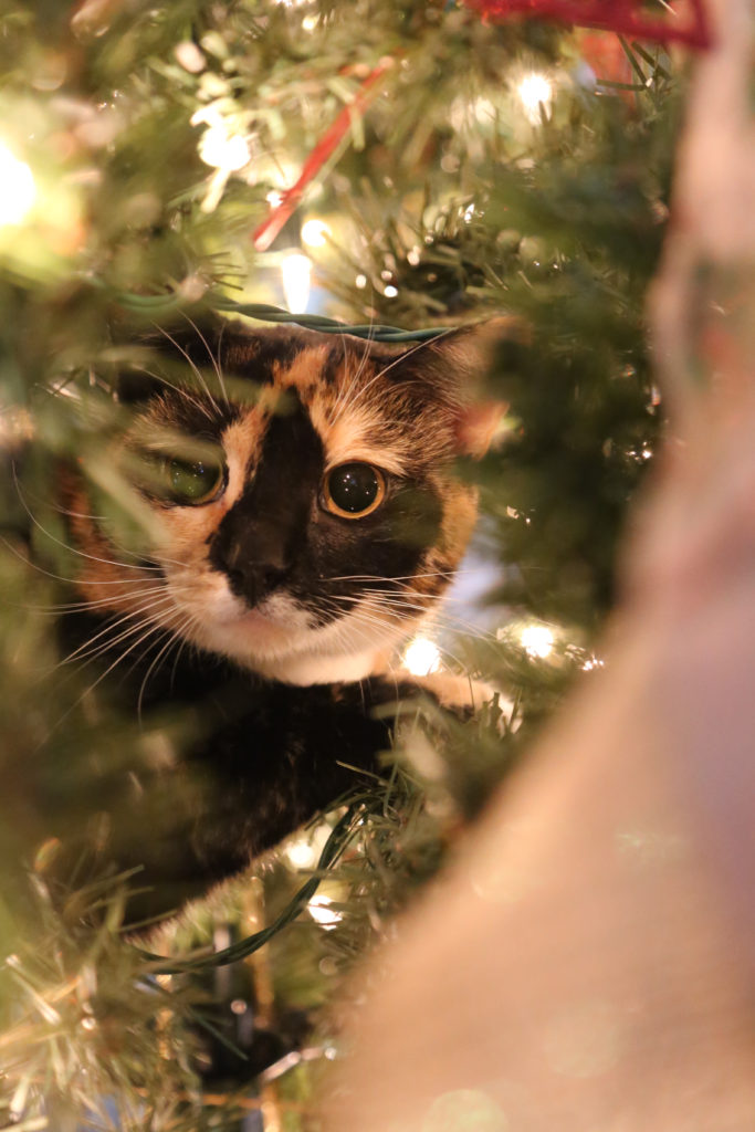 How To Make The Holidays Safer For Your Pets A Southern